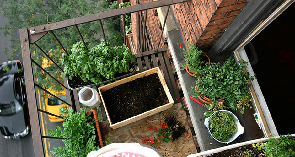 Urban Gardening How to Grow Delicious Things in Your Tiny